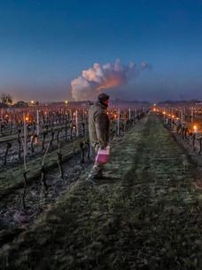 Rampjaar voor Franse Wijnbouwers ?