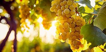 Onbekende wijnrassen.jpg