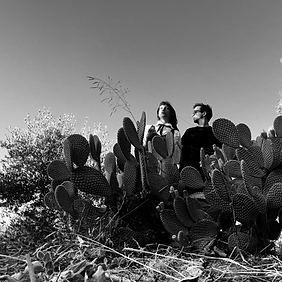 spotify image cactus.png