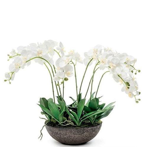 Орхидея в почве