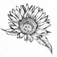 Sunflower- Commissioned Tattoo Design