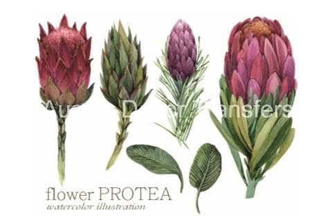 Australian Wildflowers II - Transfer by Aussie Decor Transfers
