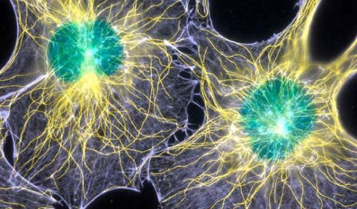 Biophotons Discovered In The Brain That Could Hint Our Consciousness is Directly Linked to Light!
