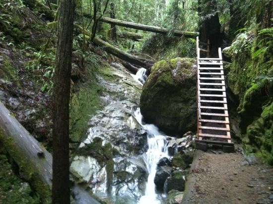 dipsea-trail.jpg