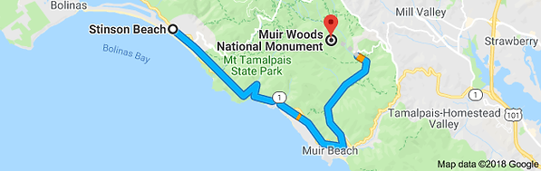 muir woods map.png