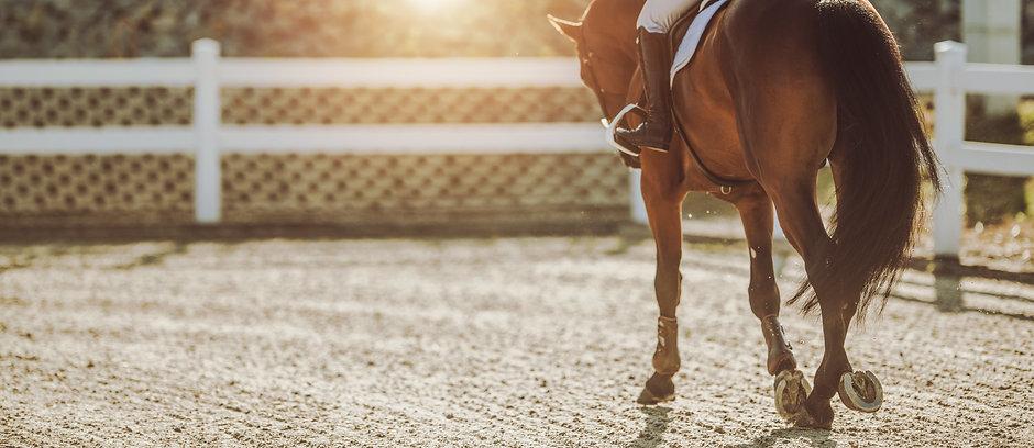 cheval trottant en carrière | Club Hippique du Quercy