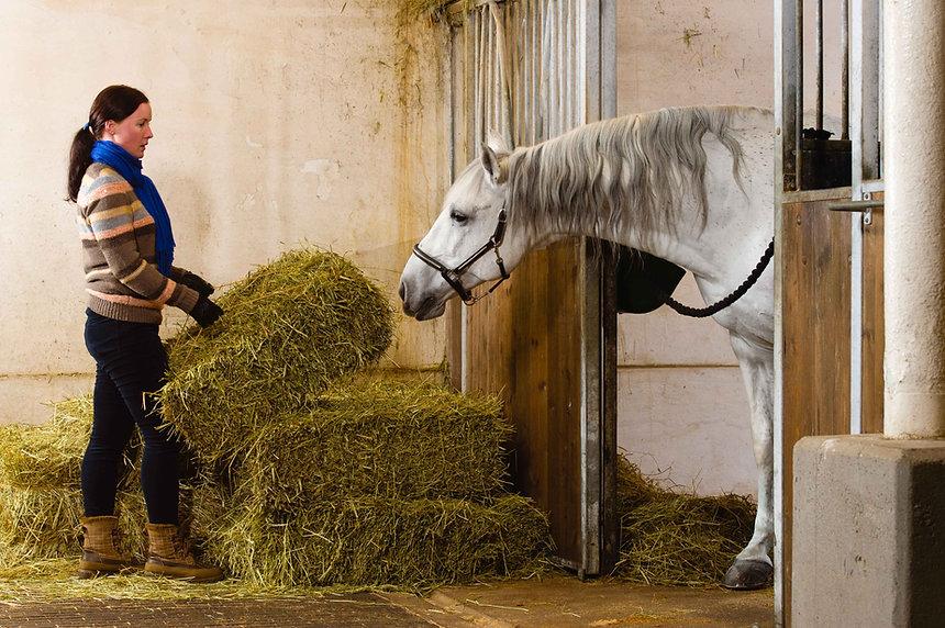 cheval au box se nourrisant | Club Hippique du Quercy