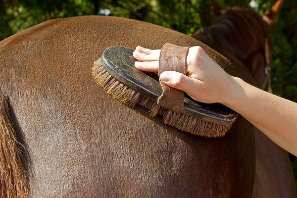 bouchonnage du cheval | Club Hippique du Quercy