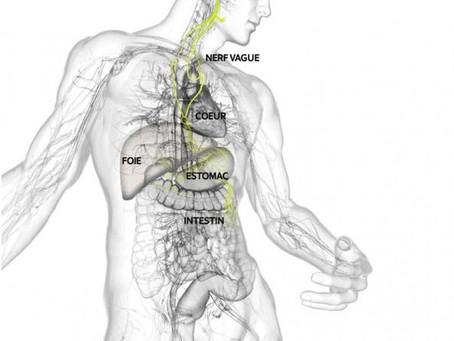 Quel lien relie les cervicales et les douleurs viscérales