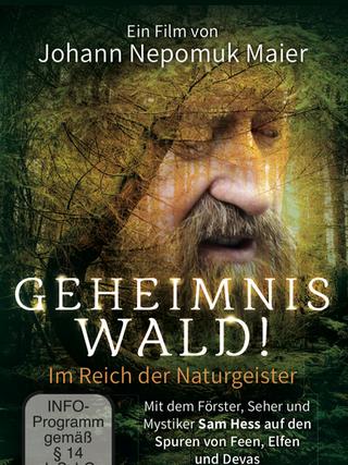 Geheimnis Wald