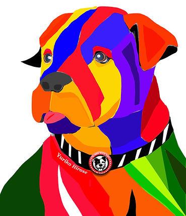 newdog3.jpg