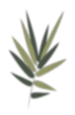 Fern-Leaf.png