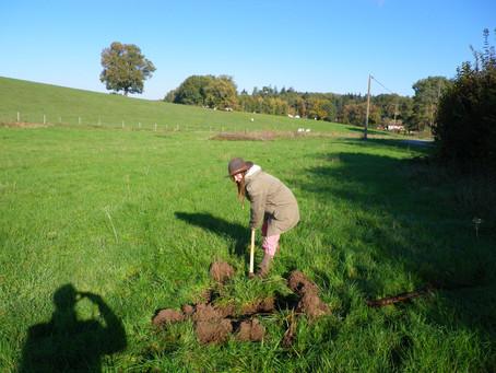 Plantation des premiers arbres de l'association