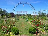 pergola et rosier au jardin   loir et cher   cours au jardin