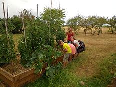 jardiner à l'école | animation jardin centre aéré | Bléré