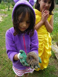 enfant et hérisson au jardin | cours enfants | Sublaines