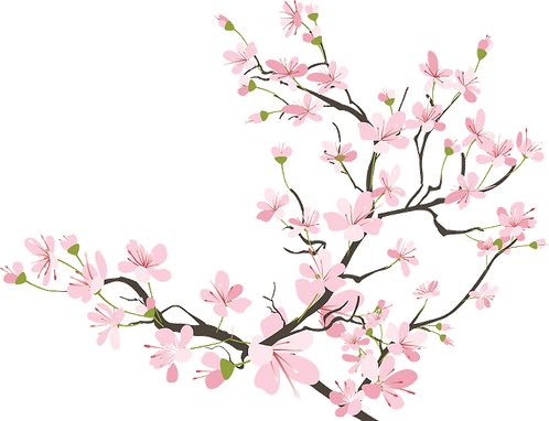 cherry-blossom-tree-clipart-.png