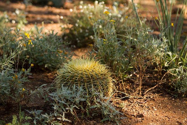 lil cactus 9-2-21.jpg