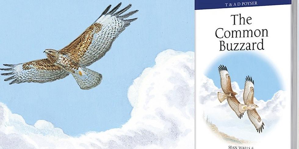The Success of Common Buzzards