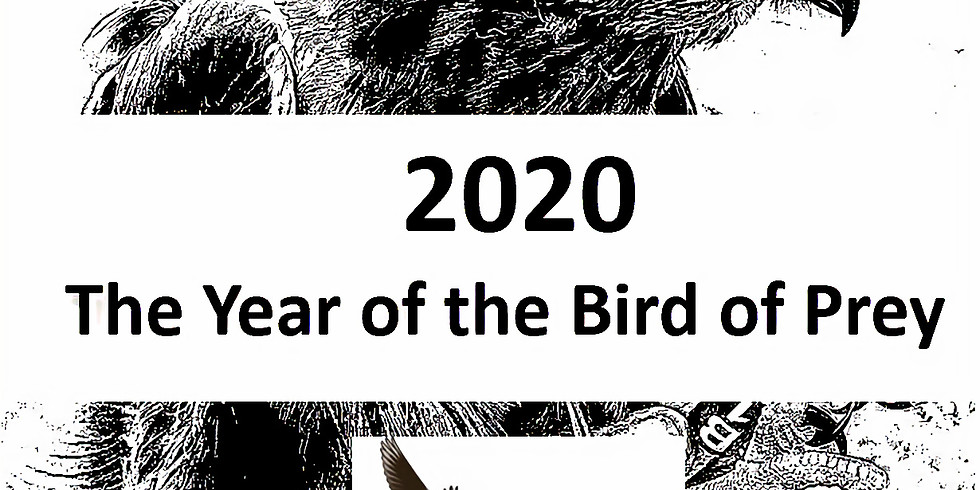 2020 Year of the Bird of Prey