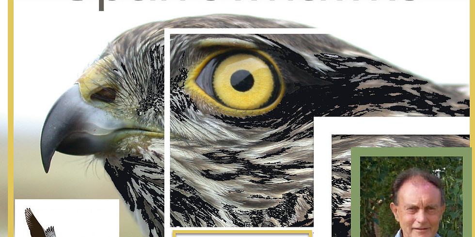 Sparrowhawks - 30 years of research by Ian Newton