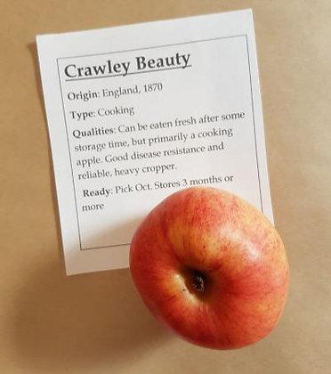 Crawley's Beauty