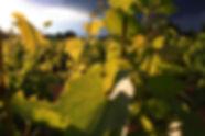 producteur de vin et hébergement Beaujolais