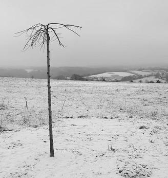 16.arbre.jpg