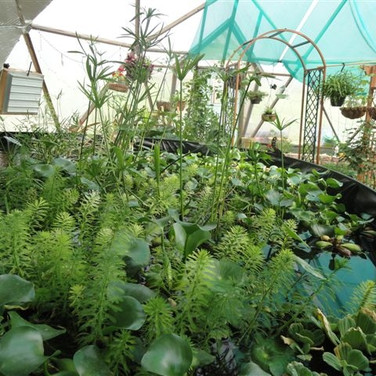 Sample Dome Pond Plants