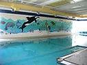 indoor heated pool, therapeutic pool, zero entry pool, youth swim classes, toddler swim, open pool, family swim