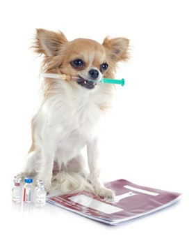 What to expect after your pet's vaccination