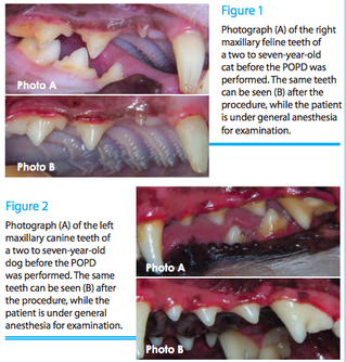 Before and After of Non-Anesthetic Dental Cleaning