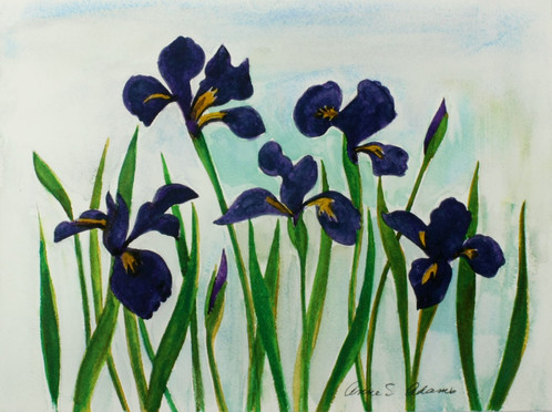 Irises_1