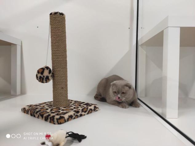 Котик в домике