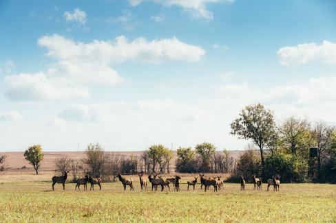 rocker-ranch-67.jpg