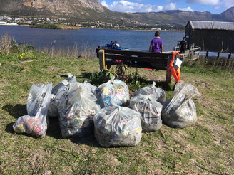 Discoverer Service Project - Zandvlei Clean-Up
