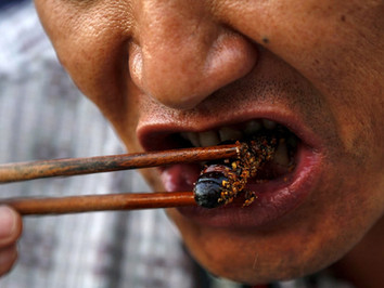 You Will Eat Bugs, and You Will Enjoy it!