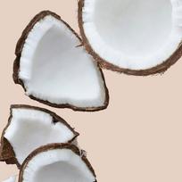 Fiesta Tropicale Coconut