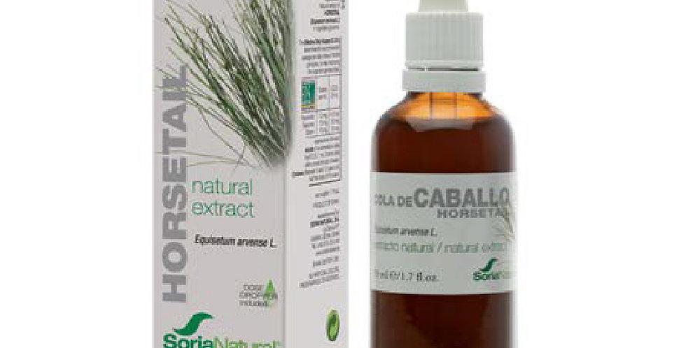 馬尾草萃取液 Horsetail Extract(短期產品 04/20216折優惠,售完即止)