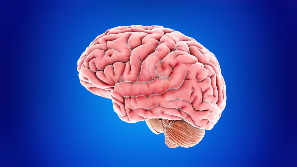 Emotions and the Limbic System