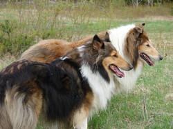 dogs make us happy