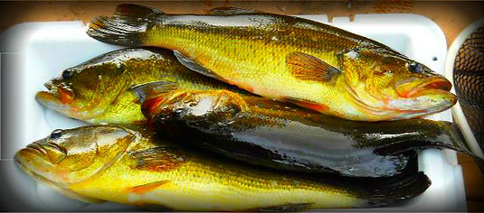 Guests of The Hideaway caught these fish in Pocomoonshine Lake