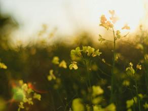 Accueillir l'énergie de l'été, saison de l'expansion et de la maturité