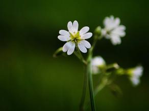 Accueillir l'énergie du printemps, temps du renouveau