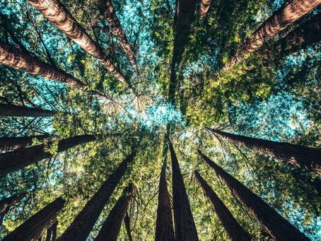(會員限定) 森林大火肆虐,Medici Club想要邀請「會員」來討論,我們如何鼓勵台灣人來種「三億顆樹」