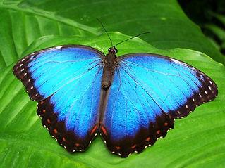 butterfly-142506.jpg