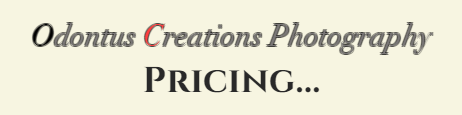 Website Price Banner.png