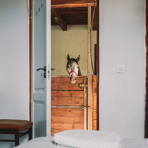 Stable Apartment