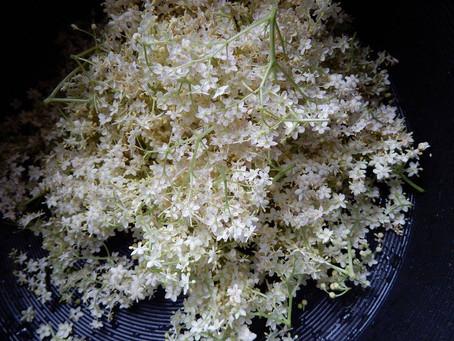 Recettes à base de fleurs de sureau