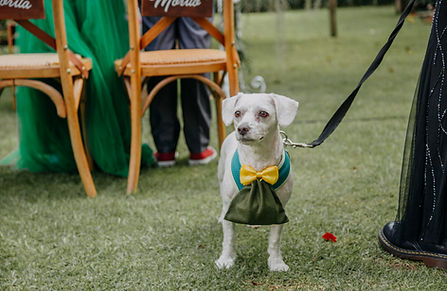 Mascotas en ls bodas